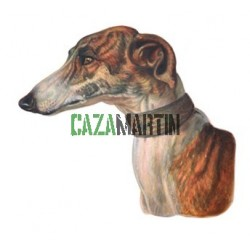 CABEZA DE GALGO CAZA 97